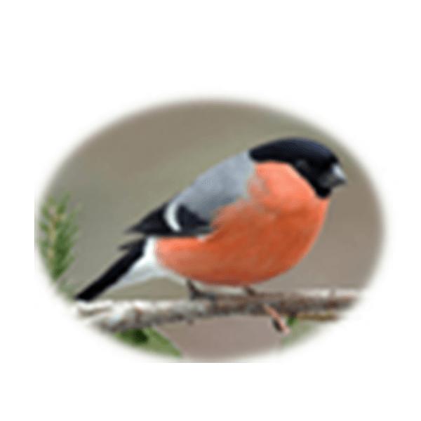 Vogelpark_Schifferstadt